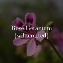 rose geranium - wildcrafted botanical skincare