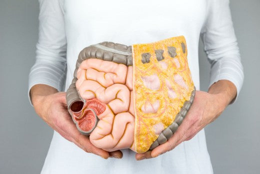 Colon Hydrotherapy + Pre – Colon Hydrotherapy Nutrition Consultation for $120 ( Value Up to $160)