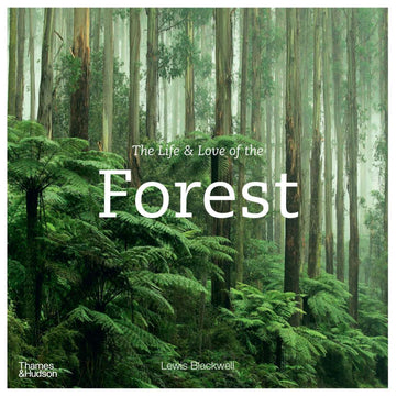 Brumby Sunstate - THE LIFE & LOVE OF THE FOREST