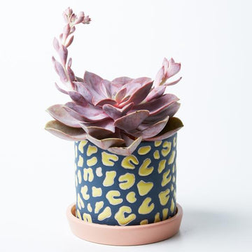 Jones & Co - Panther Pot Blue