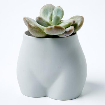 Jones & Co - BUNS PLANTER ASH