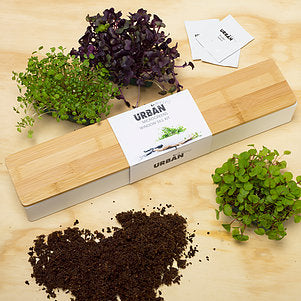 Steady Sticks - MICROGREENS WINDOWSILL GROW KIT