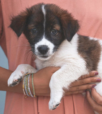 Batu Bali bracelets with Puppy - islandlife