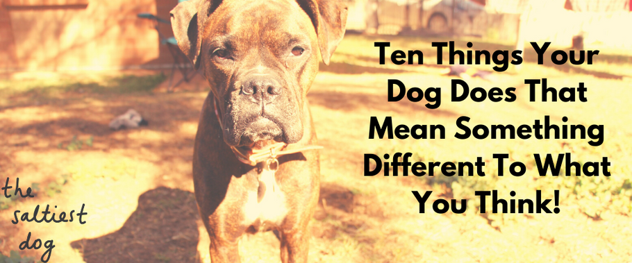 Ten Things Your Dog Does That Mean Something Different To What You Think!