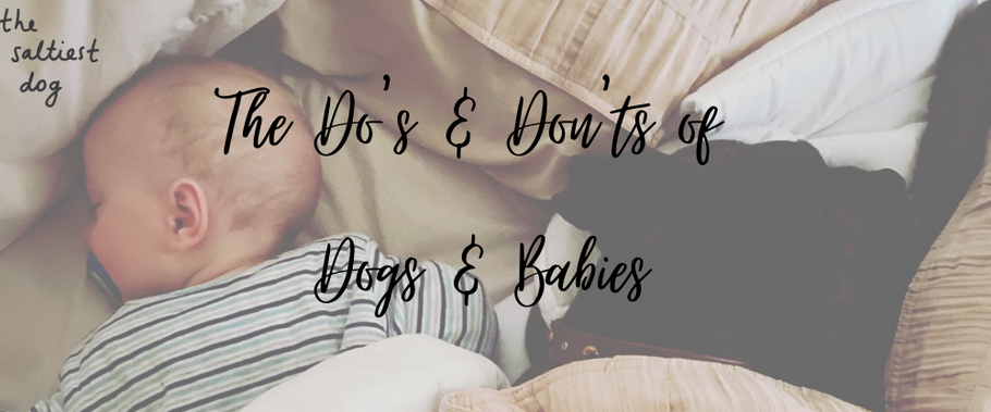 The Do's & Don'ts Of Dogs & Babies