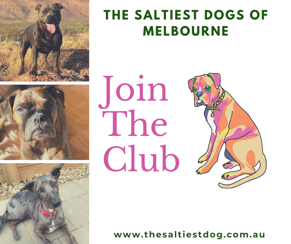 the saltiest dogs of melbourne facebook group