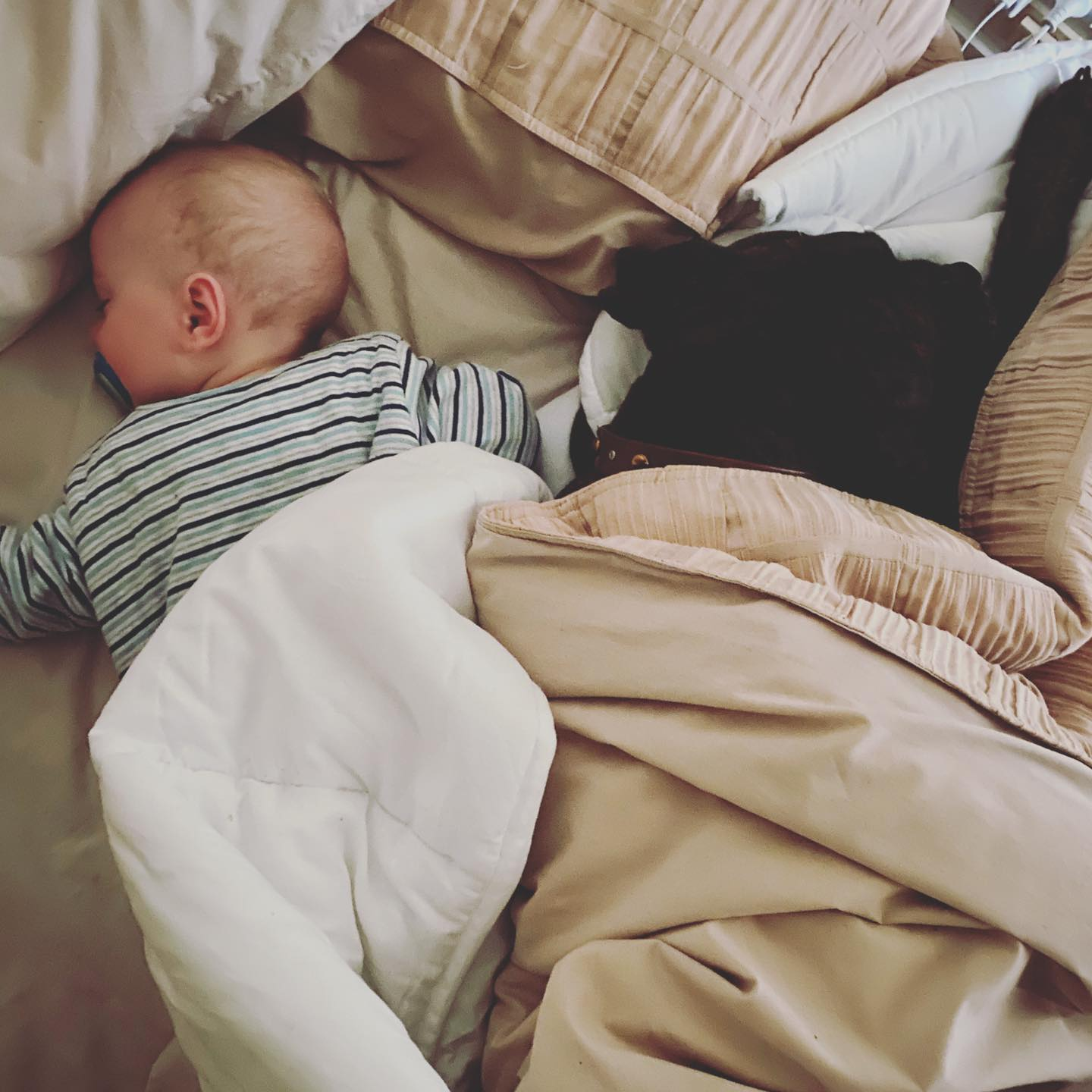 a dog and baby sleep side by side in bed asleep