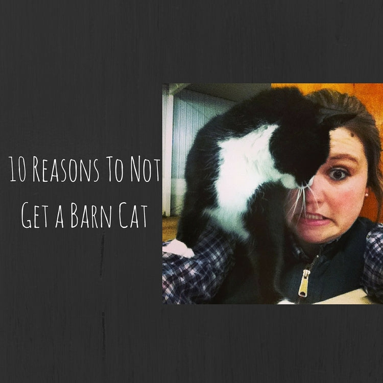 10 Reasons To Not Get A Barn Cat
