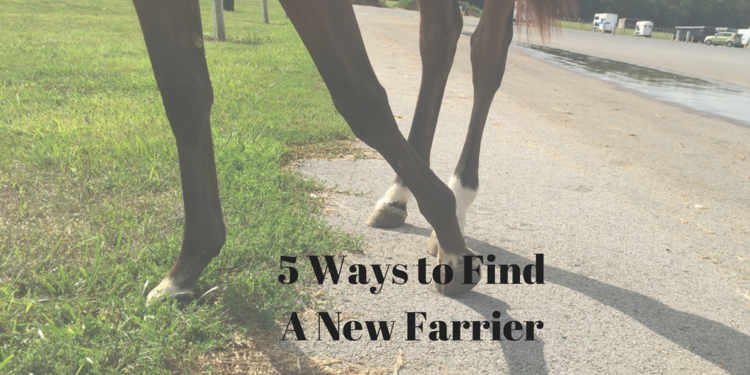 5 Ways to Find a New Farrier