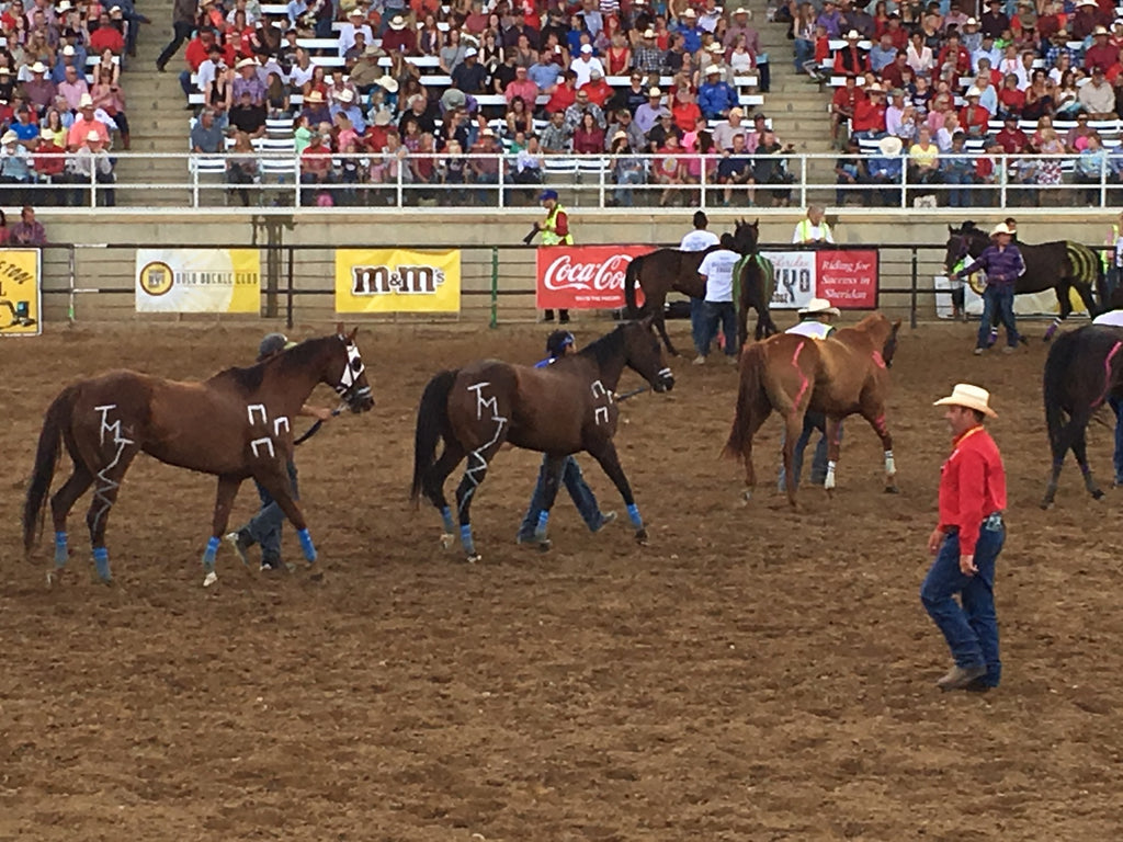 Sheridan Wyo Rodeo & The 2016 Calgary Stampede Rodeo