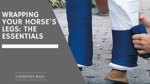Wrapping Your Horse's Legs: The Essentials