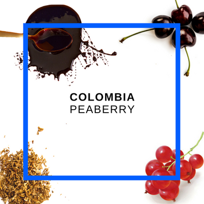 Colombia Peaberry