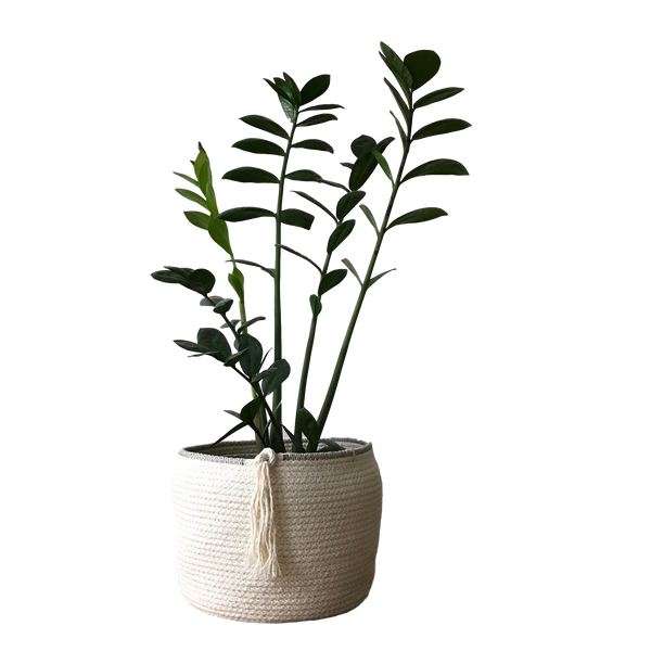 Natural Planter with Contrast Trim