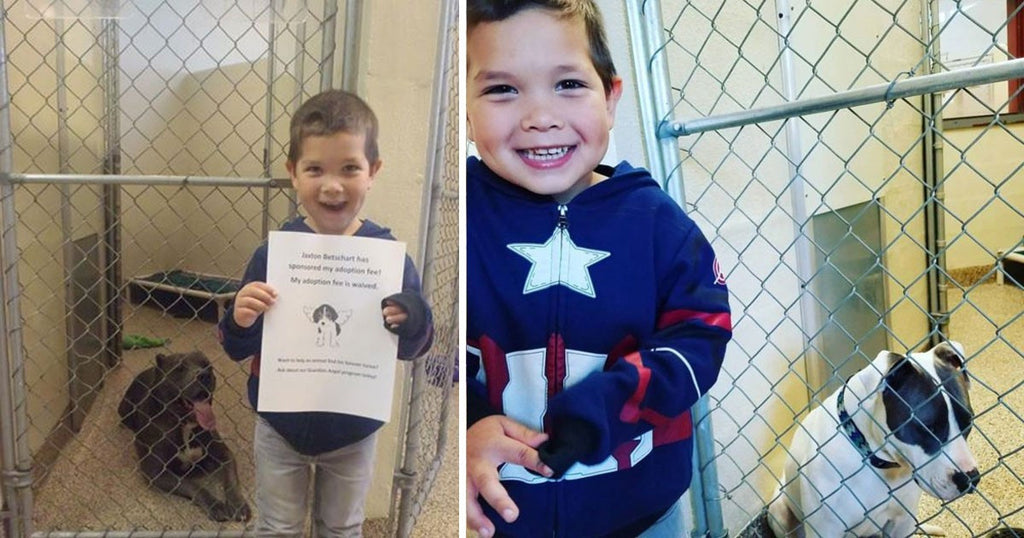 Boy Goes To The Animal Shelter To Adopt A Dog, Returns Home With Two More Dogs Using His Allowance
