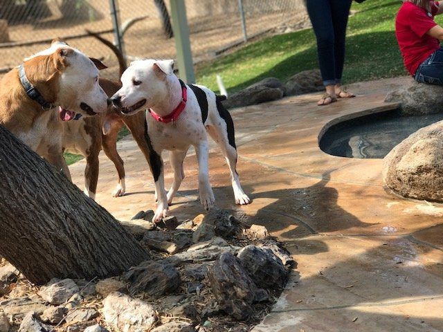 Pet Resort Throws A Special Pool Party Just For Shelter Dogs