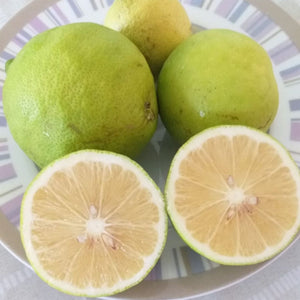 "Limoni Biologici ""Verdello"" Coltivati in Sicilia"
