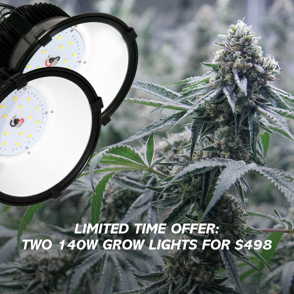 New bundle: two 140w lights for $100 less!