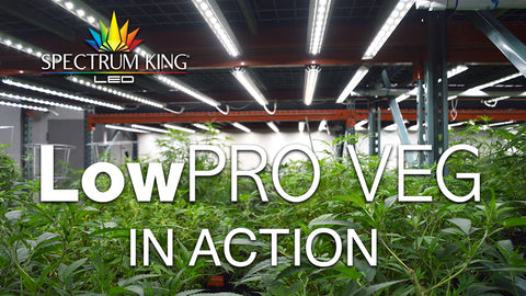 LED Grow Lights: Full Spectrum for Commercial & Home