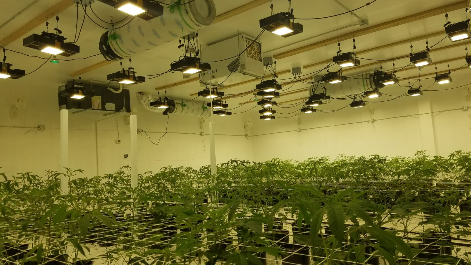 Custom Grow Lights Circuit Boards Led Arrays Colors Spectrum Made Solutions Example