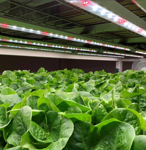 Indoor food production under LED