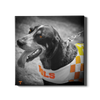 Tennessee Volunteers - Smokey Orange - College Wall Art #Canvas