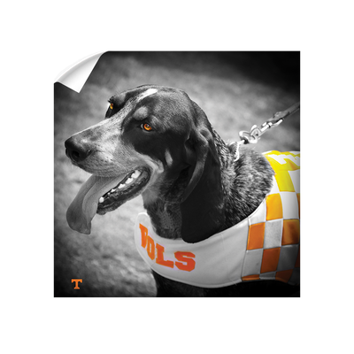 Tennessee Volunteers - Smokey Orange - College Wall Art #Wall Decal