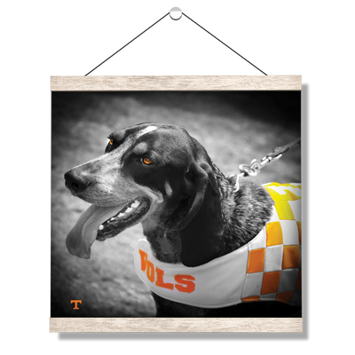 Tennessee Volunteers - Smokey Orange - College Wall Art #Hanging Canvas