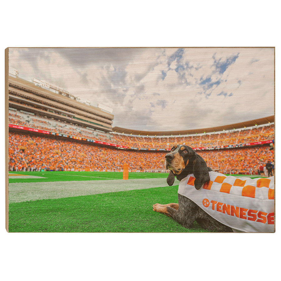 Tennessee Volunteers - Smokey's Tennessee #Canvas