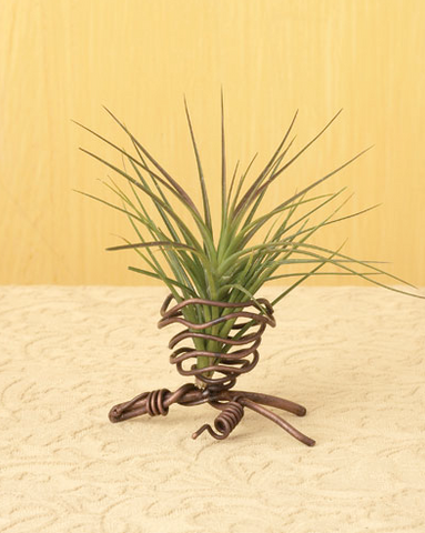 One Pod Air Plant Holder