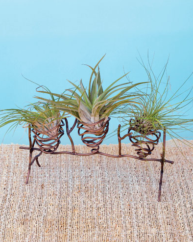 Three Pod Air Plant Holder on Wire