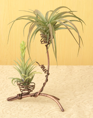 Two Pod Air Plant Holder