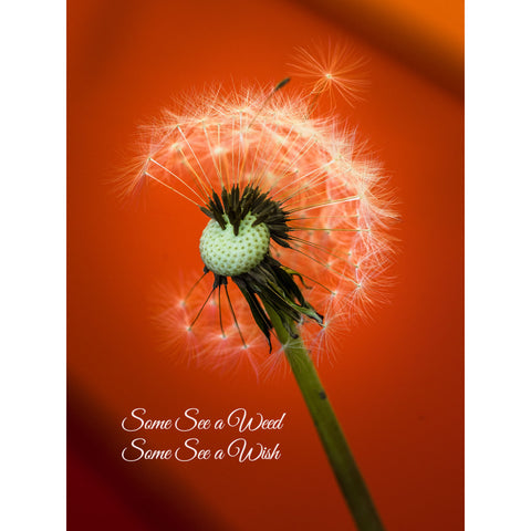 """Some See a Weed, Some See a Wish"""