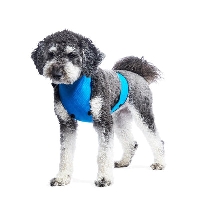 ECO BELLY BIB | edwardo blue - T.O. Dogswear