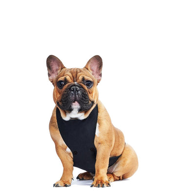 ECO BELLY BIB | lucille black - T.O. Dogswear