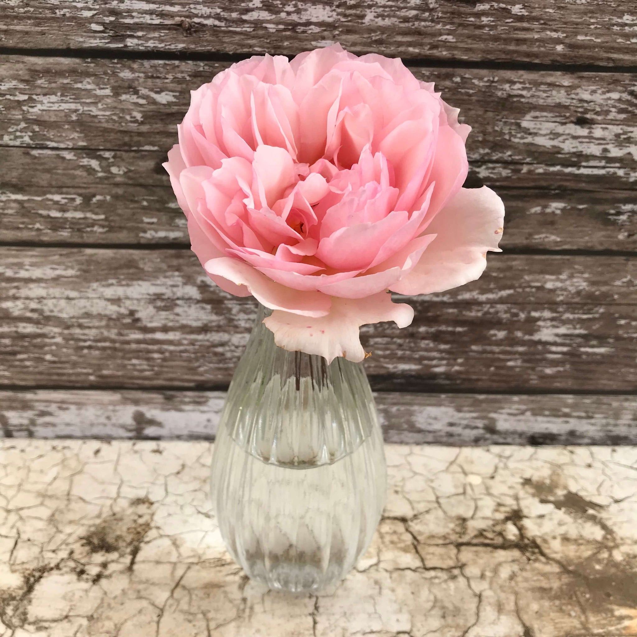 Slim Glass Vase - Dales Country Interiors
