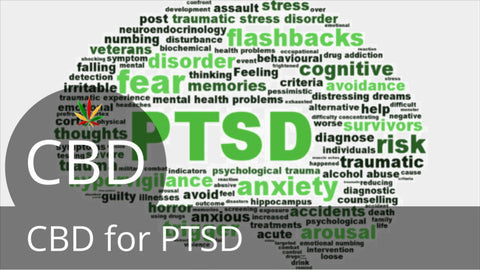Pacific CBD Co Product Can Help With PTSD Blog