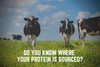 Do you know where your protein is sourced? Companies don't tell you!