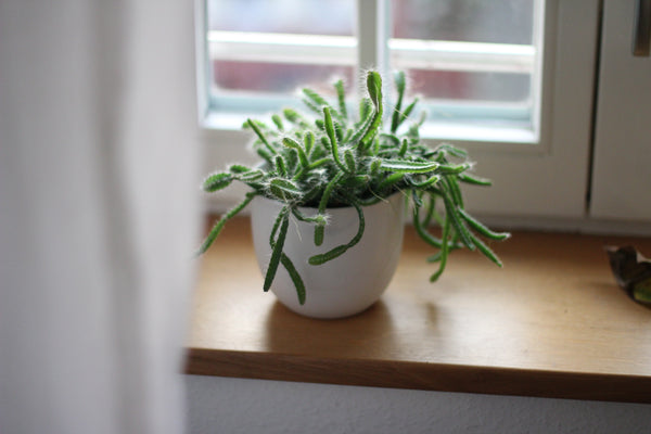 House Plant Light Summer Spring Space