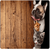 Animal Pug Dog Cat CARPET Door & Floor Mats HUGSIDEA 400mm x 600mm