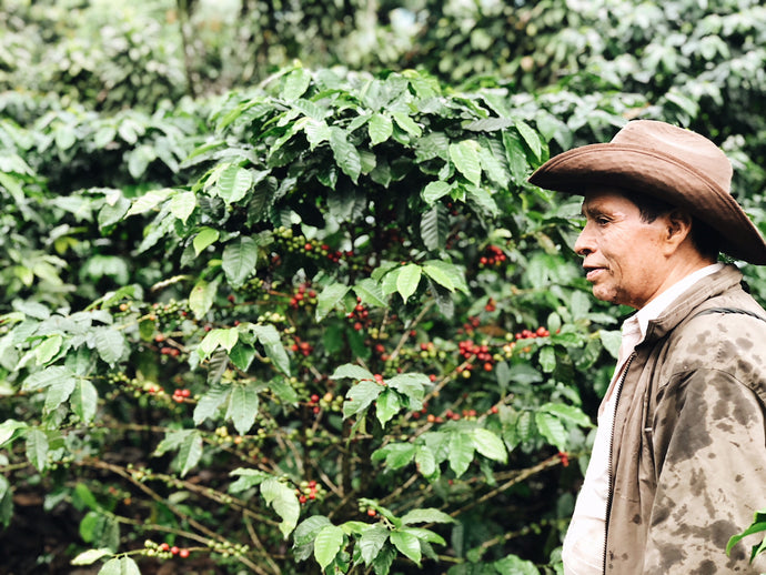 A Guide To Flavor Profiles of Our Favorite Coffee Origins