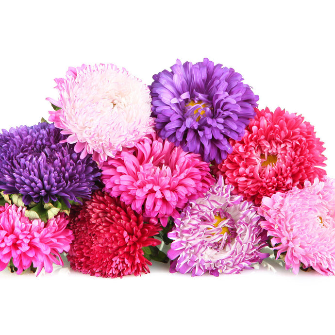 Assorted Mums