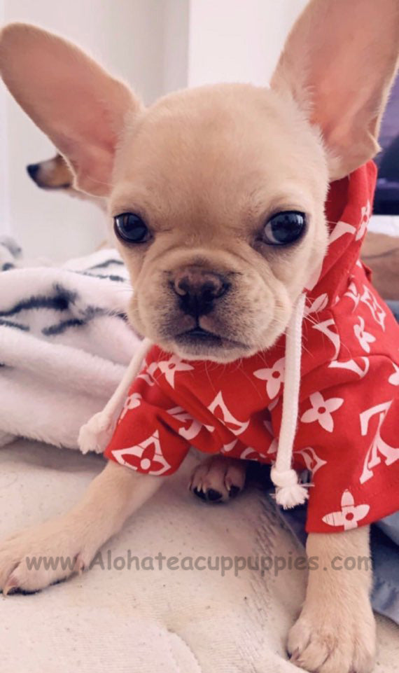 MOCHI, ALOHA TEACUP PUPPIES