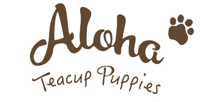 Aloha Teacup Puppies