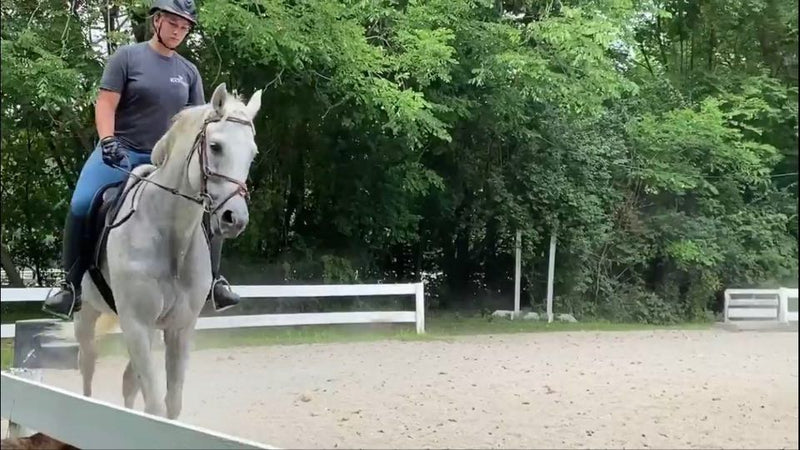 Durazno - Beautiful Gray Warhorse!