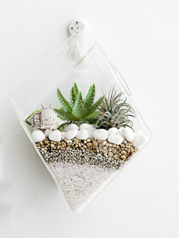 4 Pack Diamond Terrariums Hanging Wall Planters Air Plants Glass