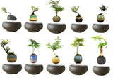 Magnetic Floating Bonsai Tree  (No Plant) *** FREE SHIPPING *** - Delivered Value