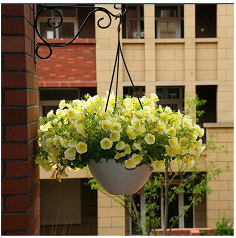200pcs Hanging Petunia Petals Flower Seeds