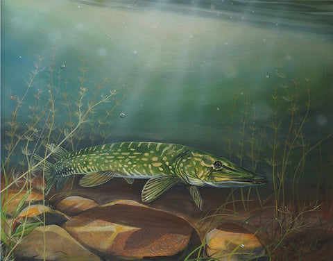 Pike in the Weeds Metal Print by Angus Grant Art