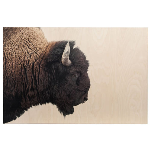 AMERICAN BISON : Clear Glass