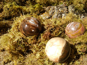 Petrified Wood Spheres